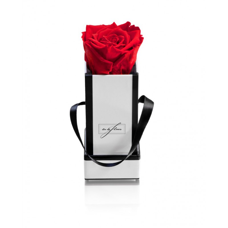 White Box XS-Forever Red