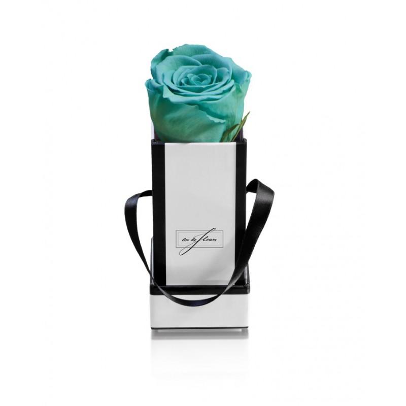 White Box XS-Minty Green