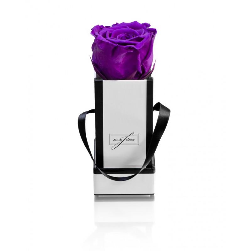 White Box XS-Dark Purple